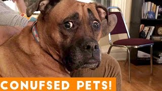 Funniest Confused Pets Compilation 2018 | Funny Pet Videos - YouTube