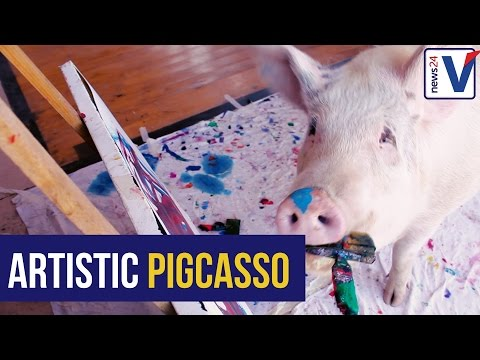 WATCH: Meet 'Pigcasso' SA's painting hog