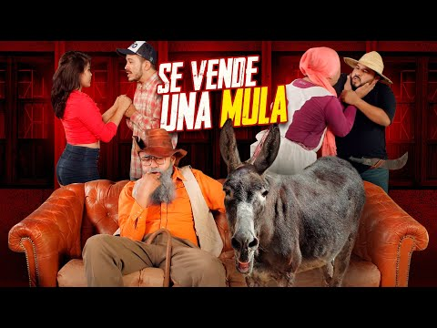 Se vende una mula - Agapito Díaz ( cortometraje ) JR INN