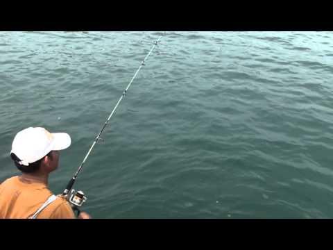 как ловить с пирса на черном море