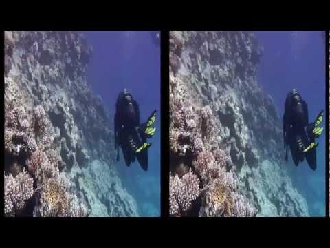 Tauchen Rotes Meer 3D  Poseidons Garden
