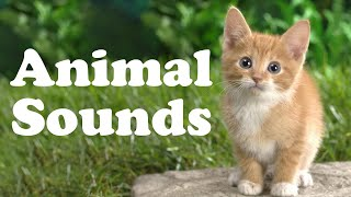 😺 Learn Animal Sounds and Names for Children | Best Way to Learn Animal Names For Kids 🐶
