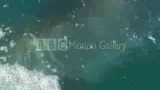 ホオジロザメ15