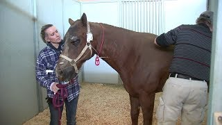 Nearly 40 horses killed after Creek Fire hit Sylmar ranch | ABC7