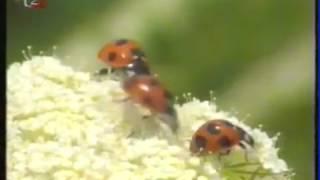 Planéta života - Hmyz