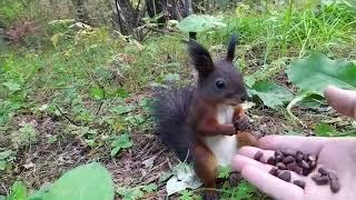 Squirrel gets frozen in time