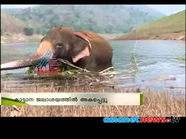 Wild Elephant entrapped in Idamalayar Dam backwater കരപറ്റാനാകാതെ ആന