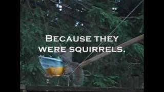 The Squirrel Catapult