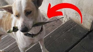 Stray Dog Refuses Food, But Moments Later He Returns With A Surprise She Never Expected