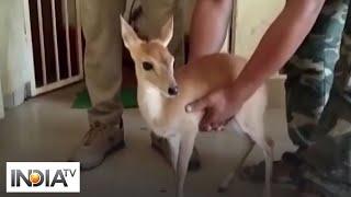 A barking deer seized from farmer's home in Odisha amazed ..