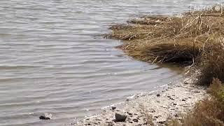 Административное расследование возбуждено по факту мора рыбы в реке Артёмовка