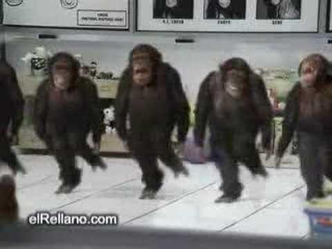 Uzicko majmuni
