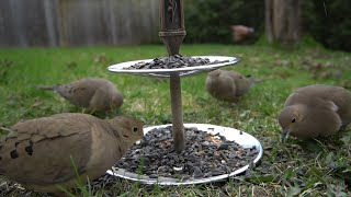 Backyard Serving Tray - 10 hour Video For Cats - April 22, 2021