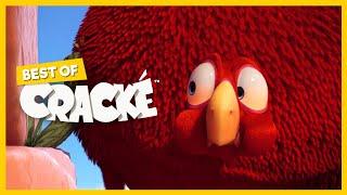CRACKE - BIG FAT BIRD | Compilation | Cartoons for kids
