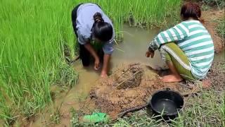 Đào Hố Bẫy Cá Sáng Tạo Độc Đáo Nhất Của Người Nông Dân