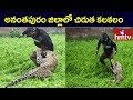 Leapord Hulchul In Ananthapur District | hmtv Telugu  News