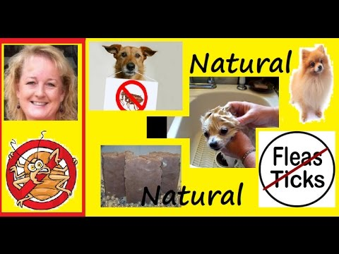 how to kill fleas on your dog naturally youtube. Black Bedroom Furniture Sets. Home Design Ideas