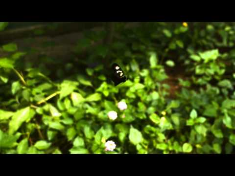 Butterflies caught on High Speed Camera