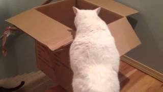 Chú mèo ngồi hộp trượt cầu thang