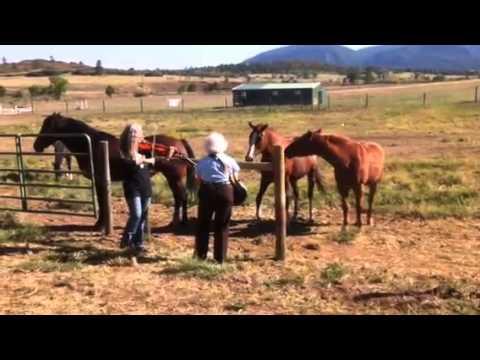 Horses like the fiddle