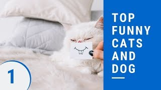 Top funny cats and dog Part 1 - 😻best funny cat and dog videos ever 2019😻