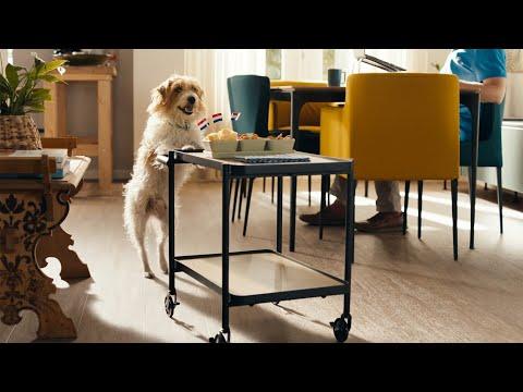 OHRA Slimme hond, slimme kat | OHRA Huisdierenverzekering