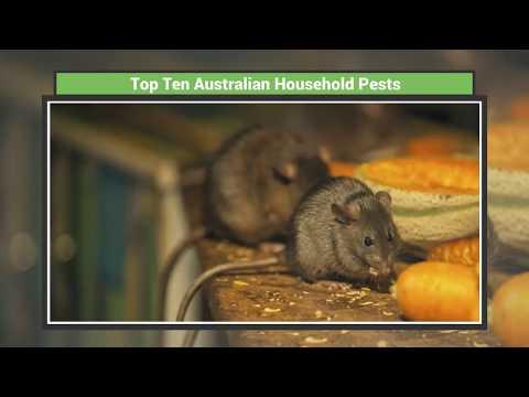 Top 10 Australian Household Pests
