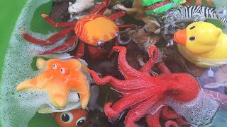 Learn Names of Sea Animals, Zoo Animals and Farm Animals Toys for Kids