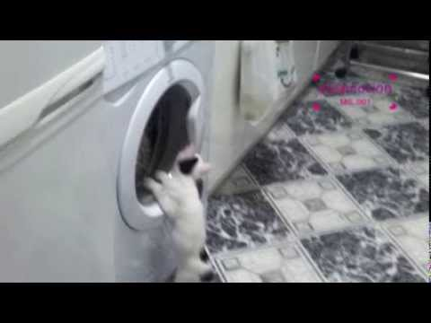 Kitten and the wash