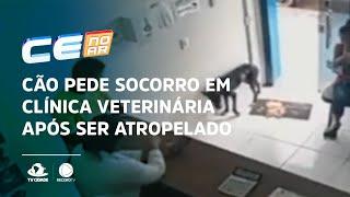 Cão pede socorro em clínica veterinária após ser atropelado