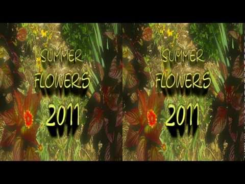 "3D Video ""Summer Flowers 2011"" YT3D Stereoscopic HD"