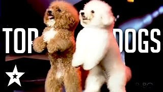The Best Dog Auditions EVER On Got Talent From Around The World