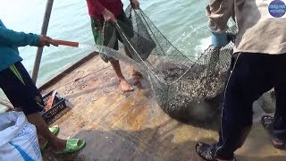 Hôm nay làm được khoảng 15 triệu anh em rất phấn khởi /P2/catch seafood in vietnam