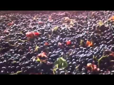 Mechanical grape sorting system for premium wines