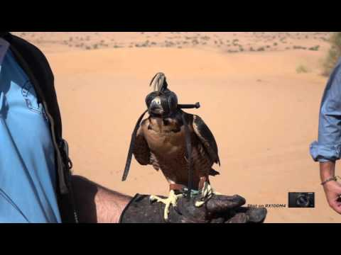 Desert Falcon in Super Slow Motion-Sony RX100IV
