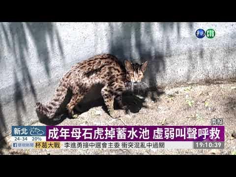 母石虎掉蓄水池呼救 林管處急救援 | 華視新聞 20190424