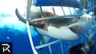10 TERRRIFYING Shark Encounters Caught On Tape
