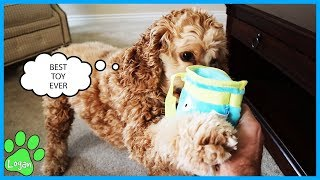 Dog Reacts To His Favorite Toy I Logan The Adventure Dog