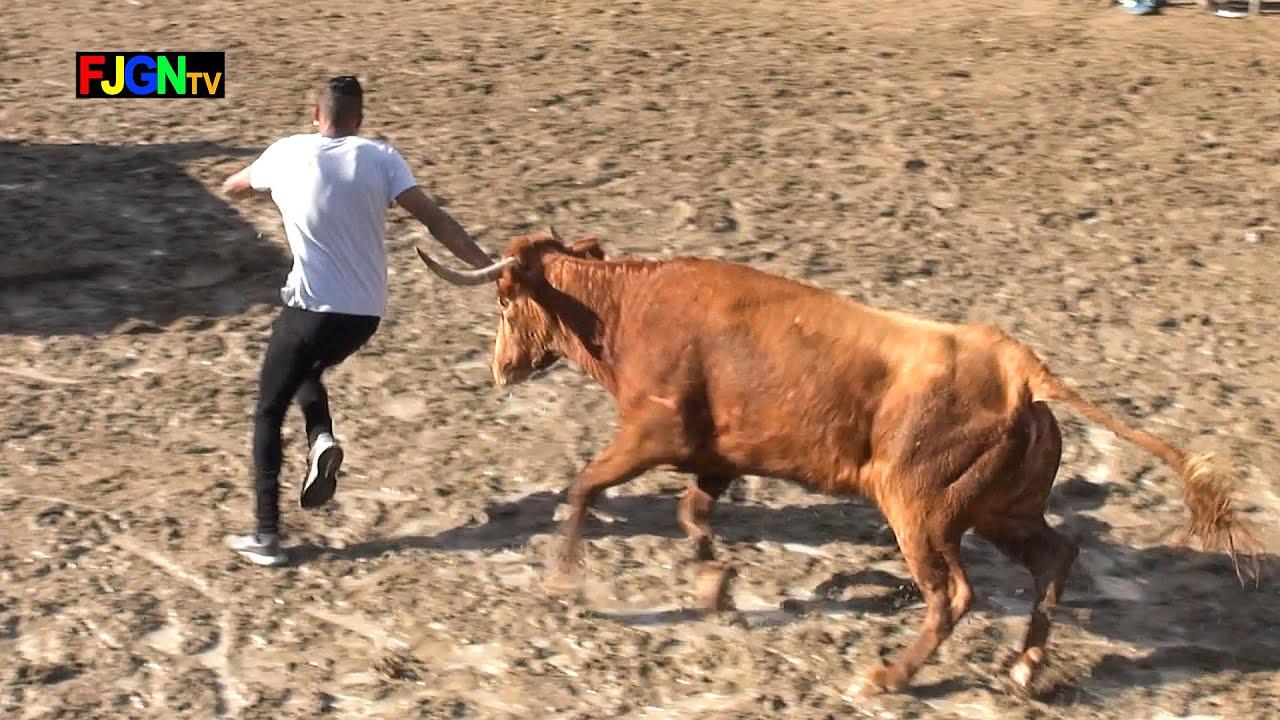 Encierro y vacas Alba Atenea - Benicassim 26-01-2020 (Castellon) Bous Al Carrer