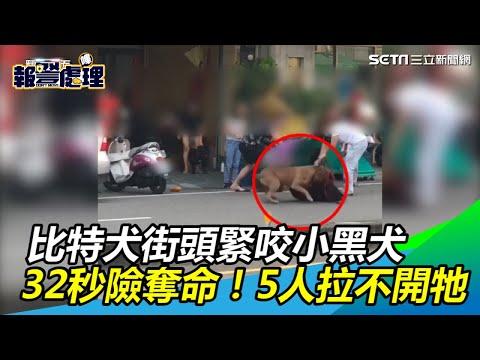 32秒險奪1命!比特犬街頭緊咬小黑犬 5個人拉不開牠|三立新聞網SETN.com
