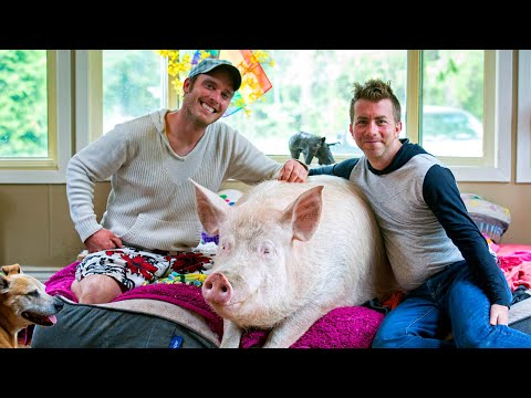 Esther The Wonder Pig Changes Couple's Life