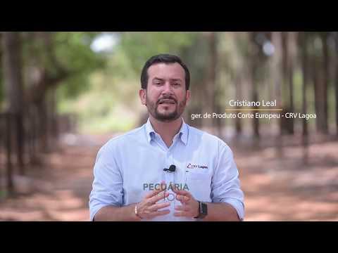 ARENAS: conheça o projeto TOURO...