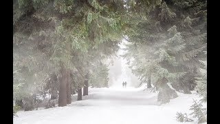 Forest Heavy Blizzard Snowstorm Ambience & Howling Wind Sounds For Relaxation m