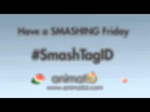 Exploding Melon - #SmashTagID - By animatID