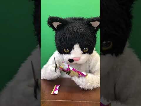むぎ(猫)「沖縄こんちくわシリーズvol.11黒糖わたあめうーじ」