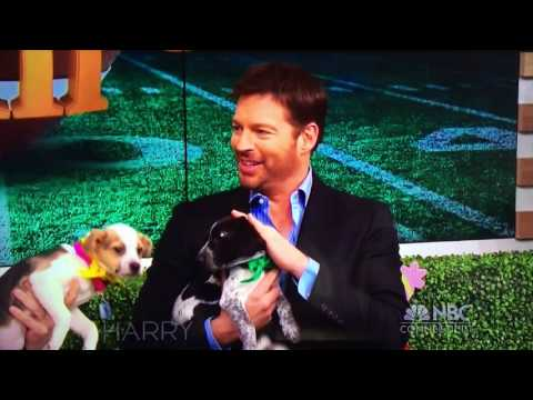 CHS puppies visit Harry Connick Jr. TV show