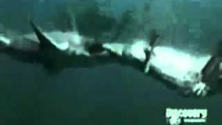 サメVSワニ2