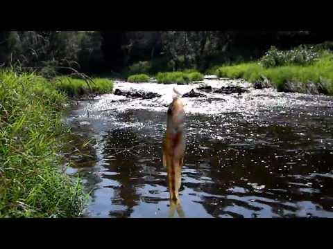 рыбалка на о.бросно тверская область видео