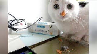funny animal videos compilation funny animals 4 -