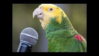 Funny Parrot - A Cute Funny Parrots Talking Videos Compilation ||NEW HD